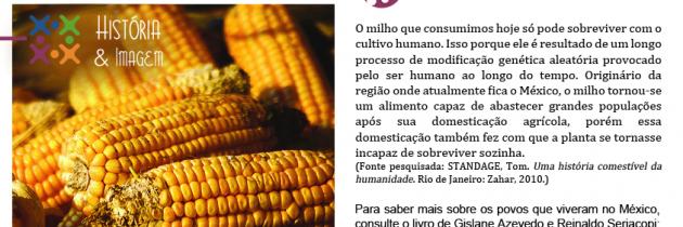 A domesticação do milho